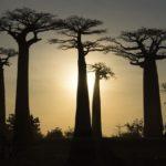 25 ans d'actions solidaires pour Madagascar