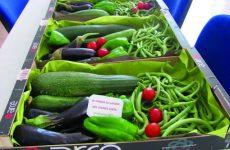 Jardins potagers partagésdans l'Hérault